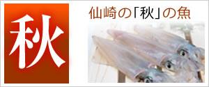 仙崎の秋の魚
