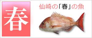 仙崎の春の魚
