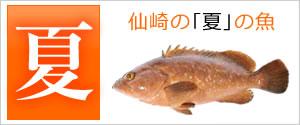 仙崎の夏の魚